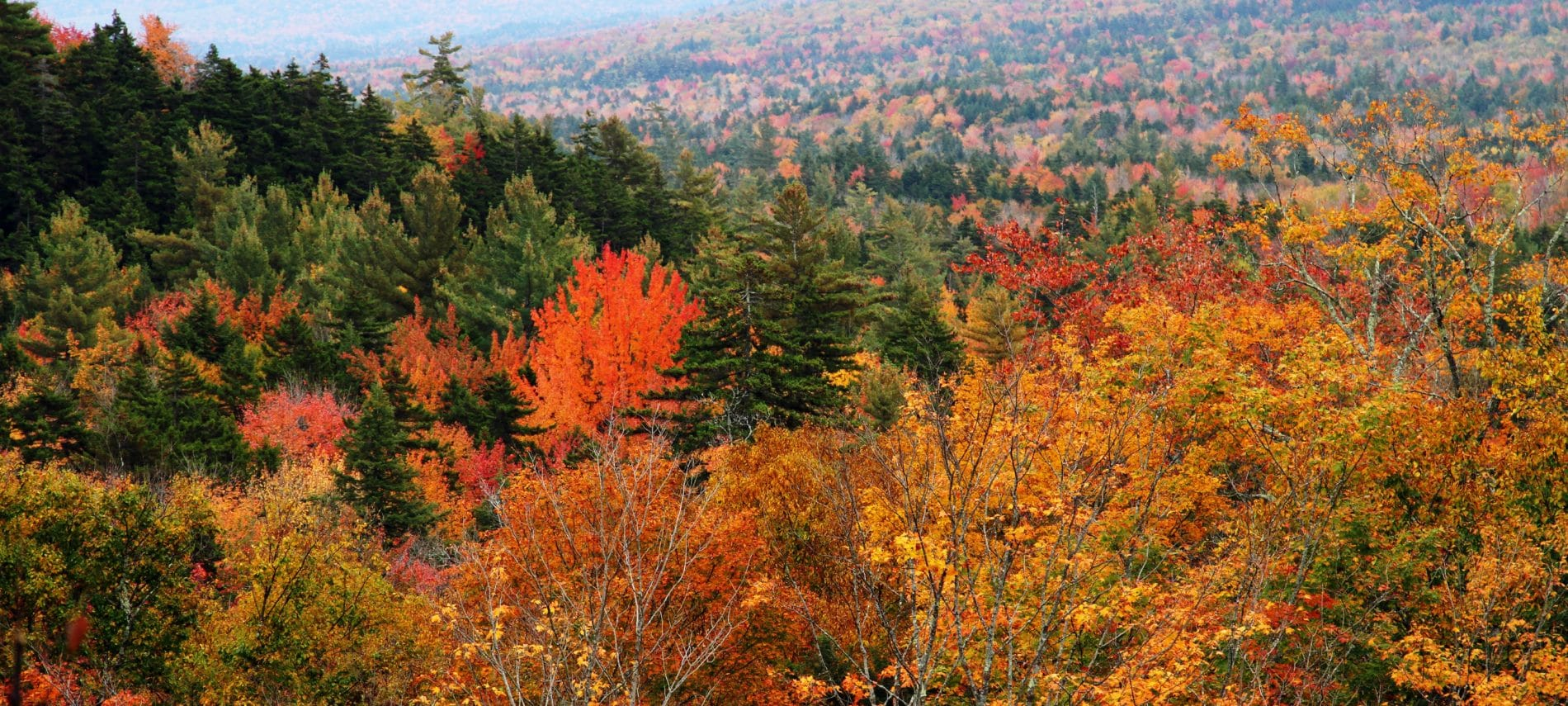 colorful fall leaves in the mountains of new hampshire