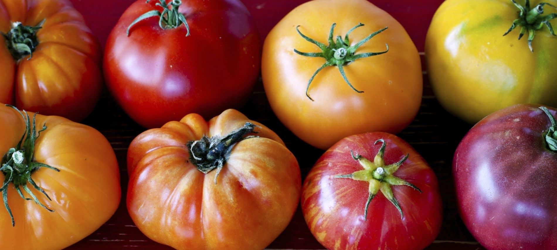 tomatoes of various shapes, sizes, and color